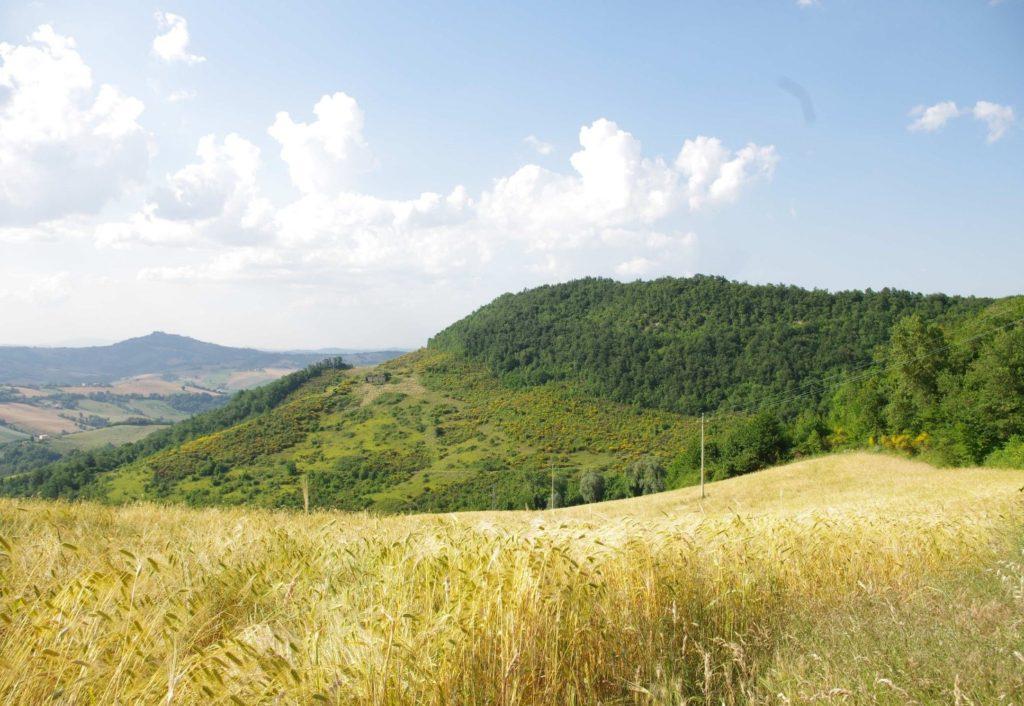Foto 1 - Crinale principale del bosco di Rovetino, sopra il quale sorgono i ruderi della rocca. Dietro di esso scorre il fosso dell'Inferno