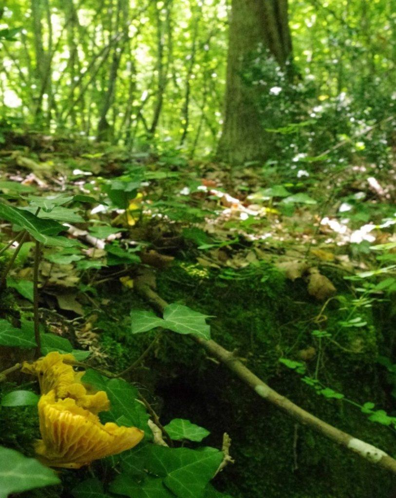 Foto 2 - Interno del bosco
